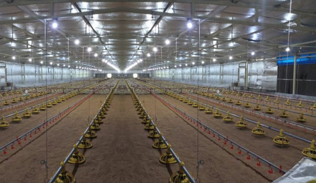 Benefits of Choosing Poultry Farm Insulation Material From Neo